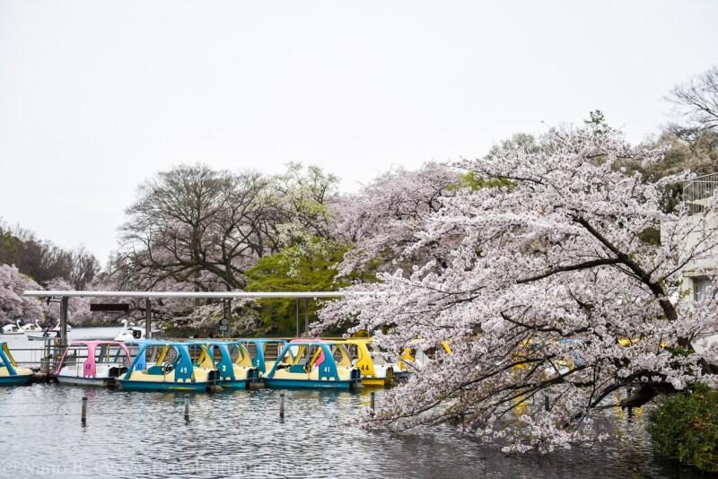 inokashira-park-15