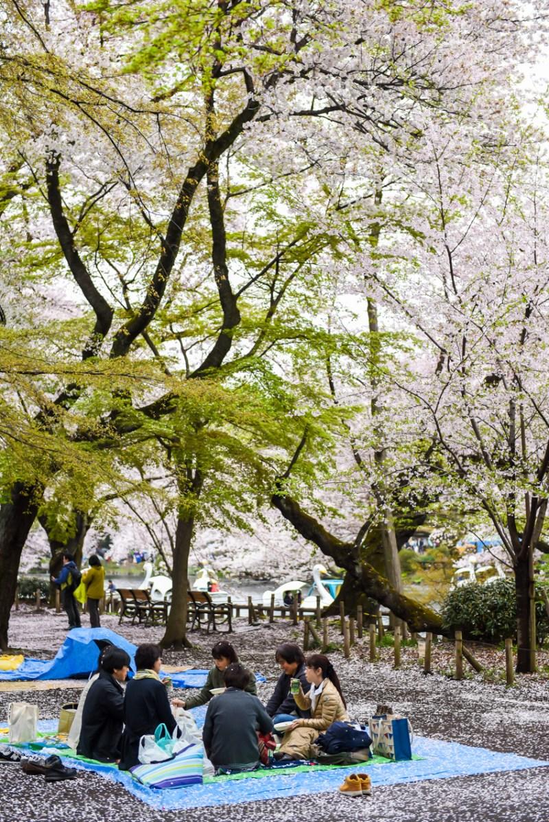 inokashira-park-8