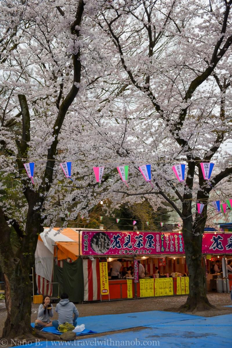 Kawagoe-Cherry-Blossom-89