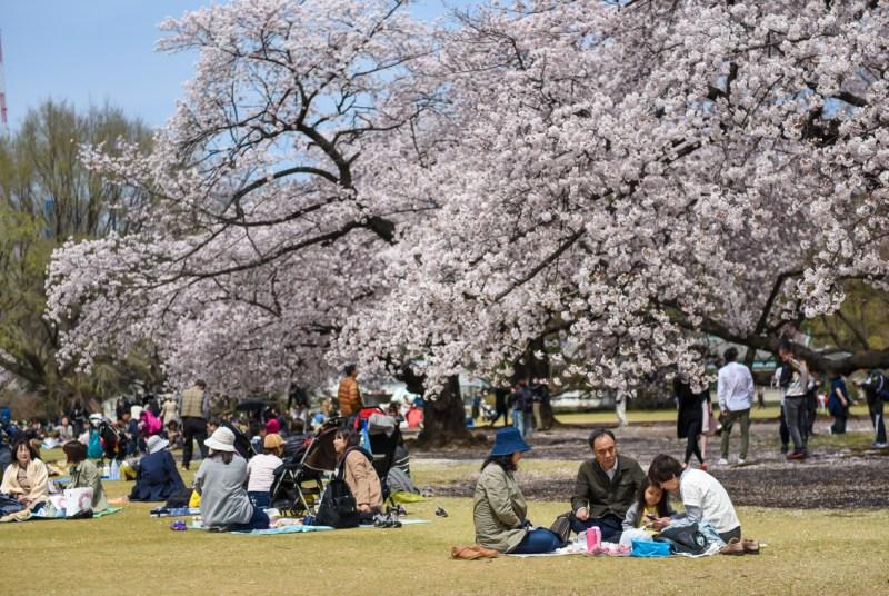 shinjuku-gyoen-garden-tokyo-20