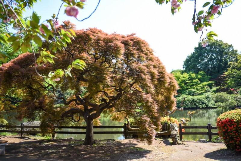 shinjuku-gyoen-garden-tokyo-31