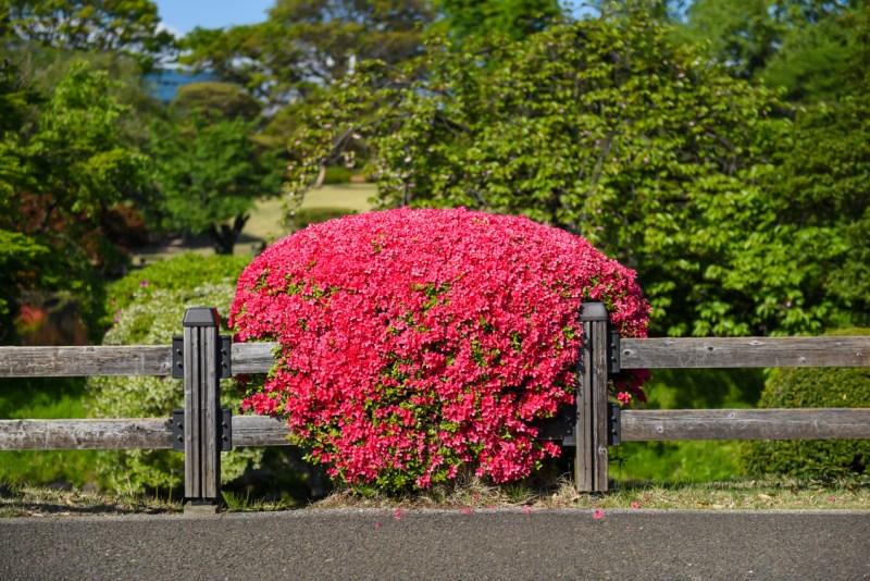 shinjuku-gyoen-garden-tokyo-45