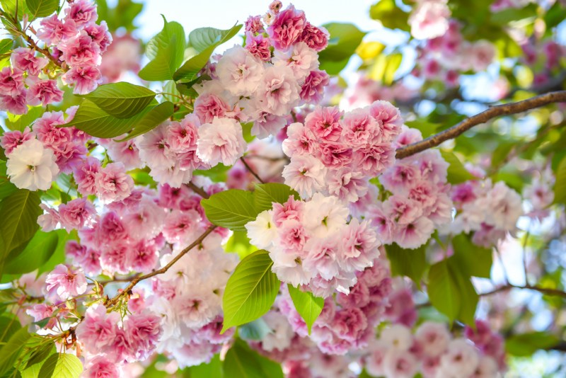 shinjuku-gyoen-garden-tokyo-56