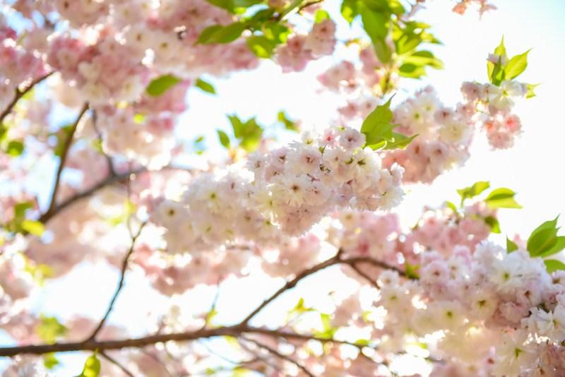 shinjuku-gyoen-garden-tokyo-61