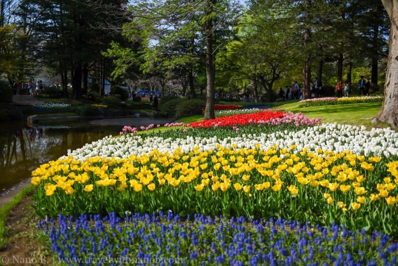 Showa-Kinen-Park-Tokyo-38