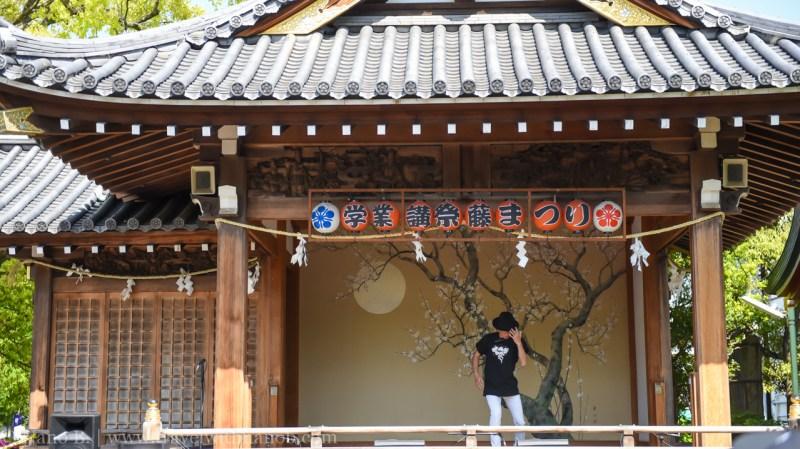 wisteria-in-kameido-tenjin-30