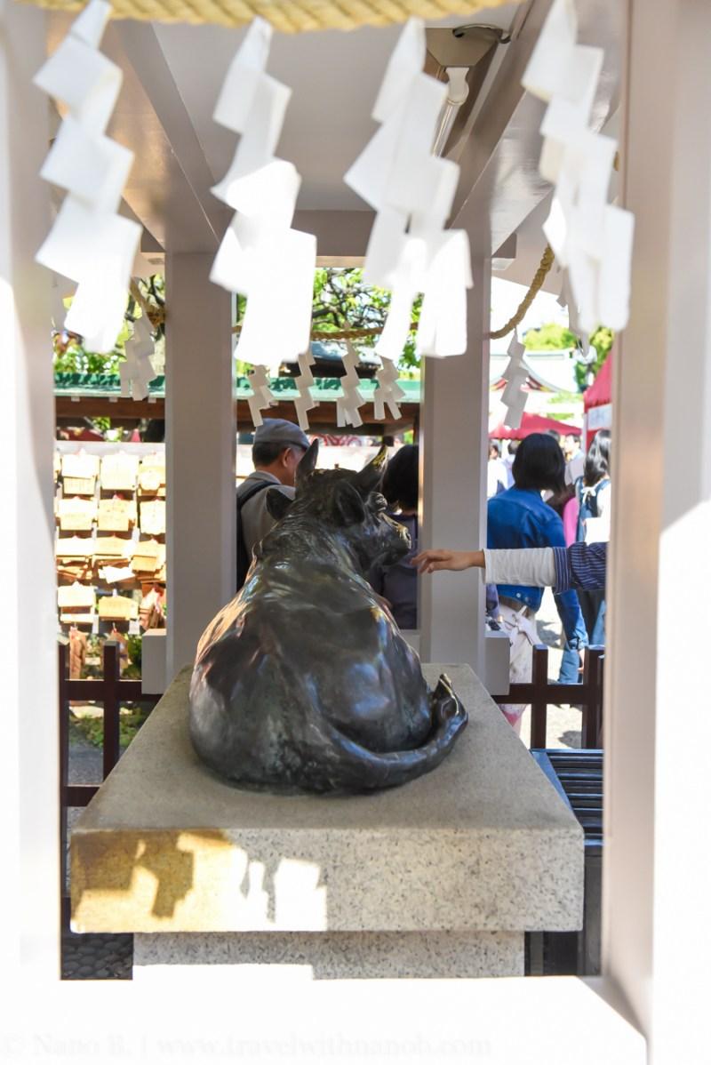 wisteria-in-kameido-tenjin-33