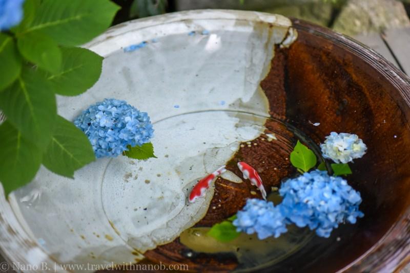 chiba-hydrangea-garden-12