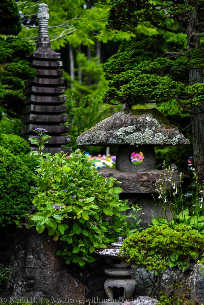 chiba-hydrangea-garden-71