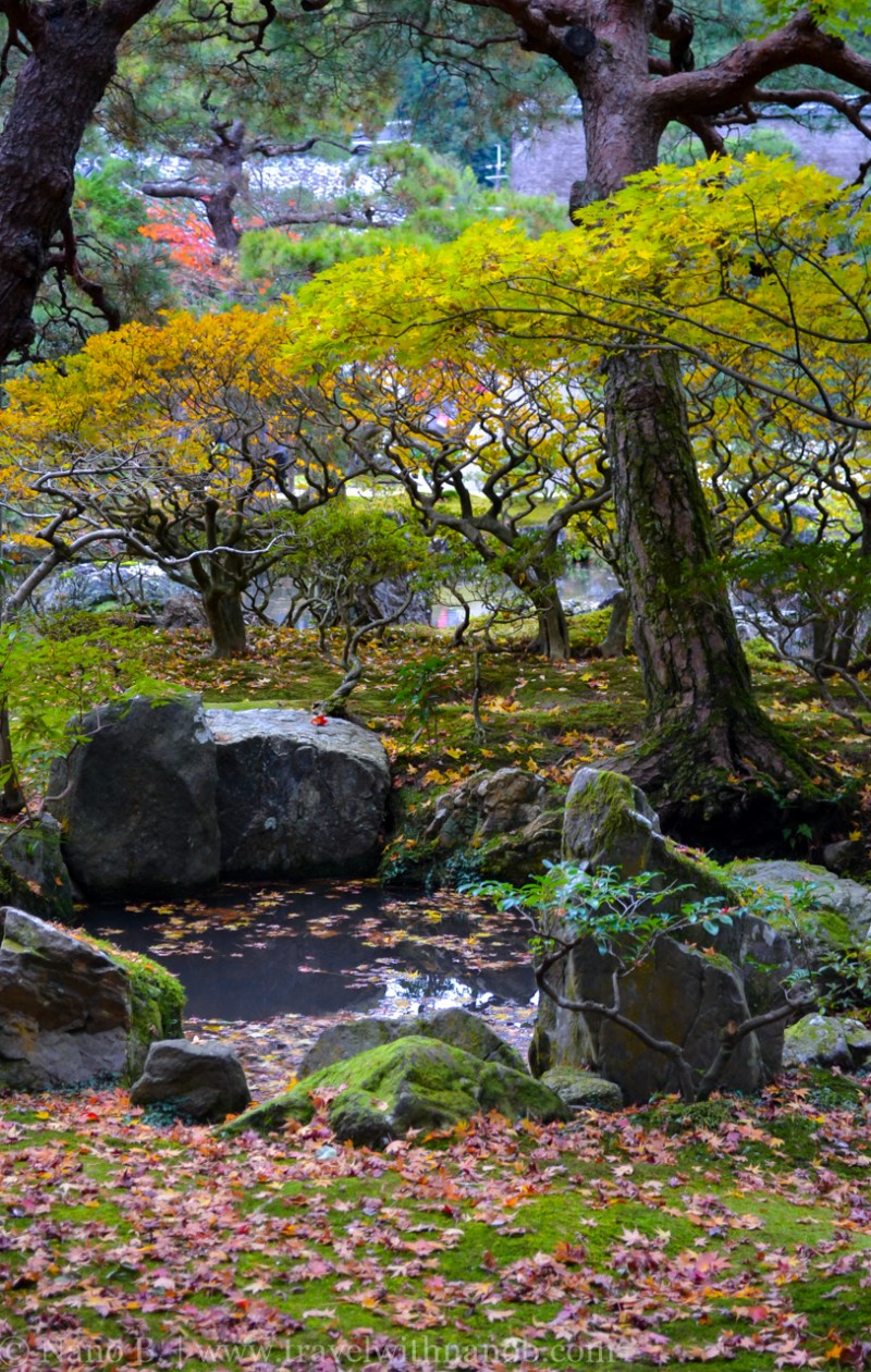 kyoto-autumn-leaves-50