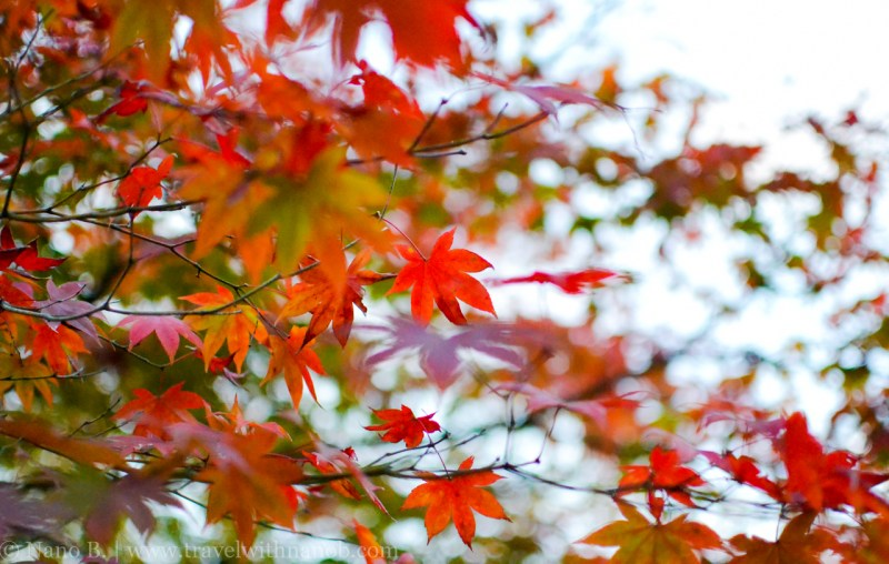 kyoto-autumn-leaves-66
