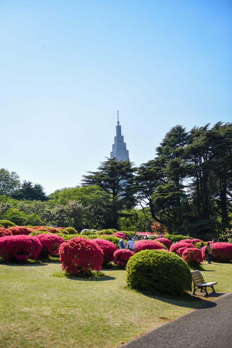 shinjuku-gyoen-garden-tokyo-43
