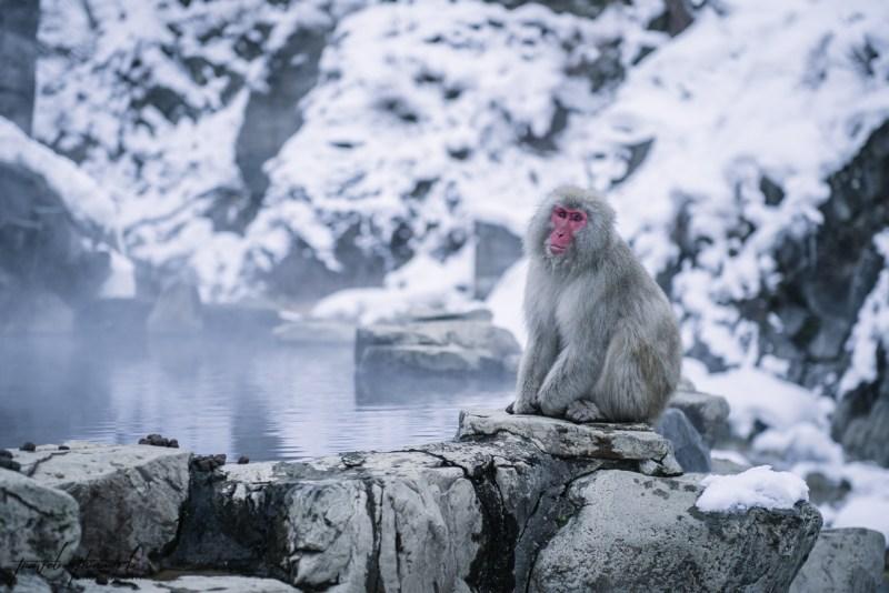 japanese-snow-monkeys-jigokudani-nagano-30