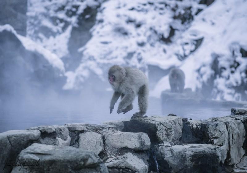 japanese-snow-monkeys-jigokudani-nagano-33