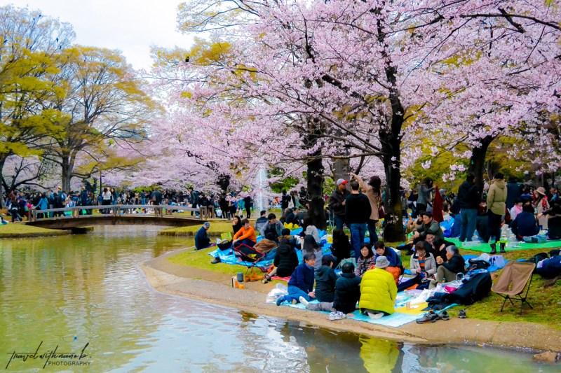 tokyo-best-cherry-blossom-spots-2