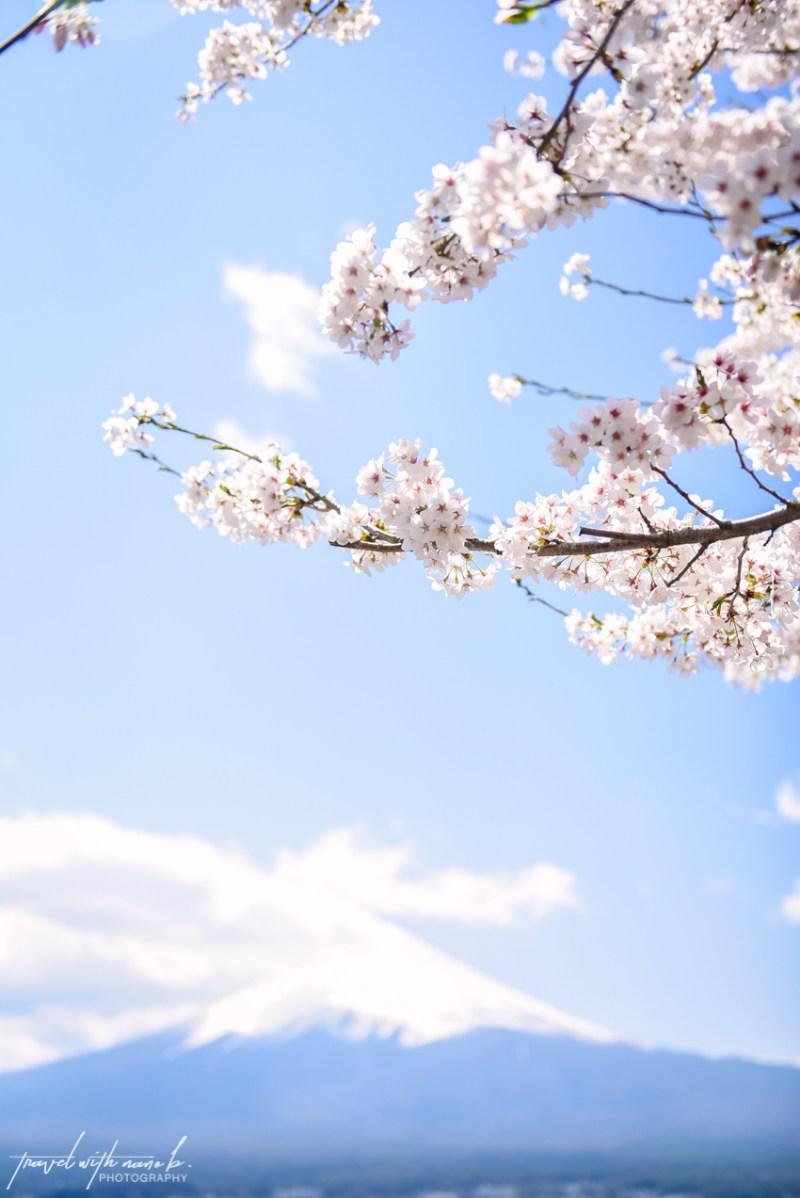 cherry-blossoms-mt-fuji-japan-13