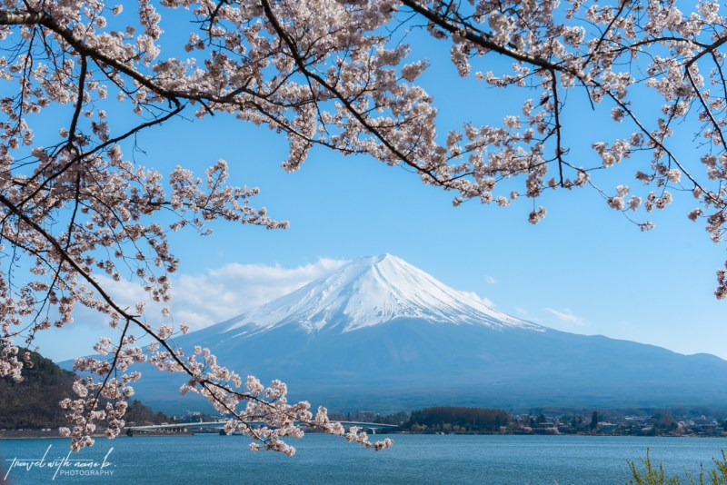 cherry-blossoms-mt-fuji-japan-22