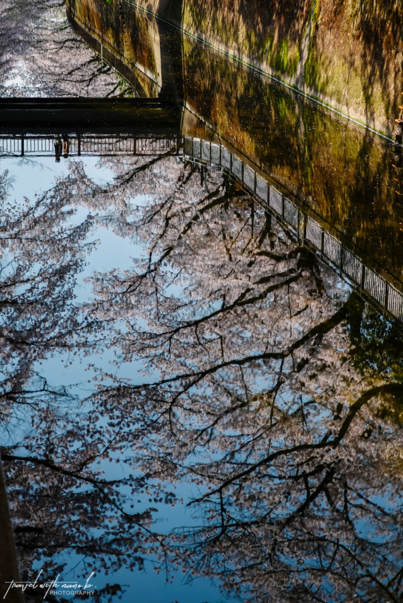 cherry-blossoms-tokyo-10