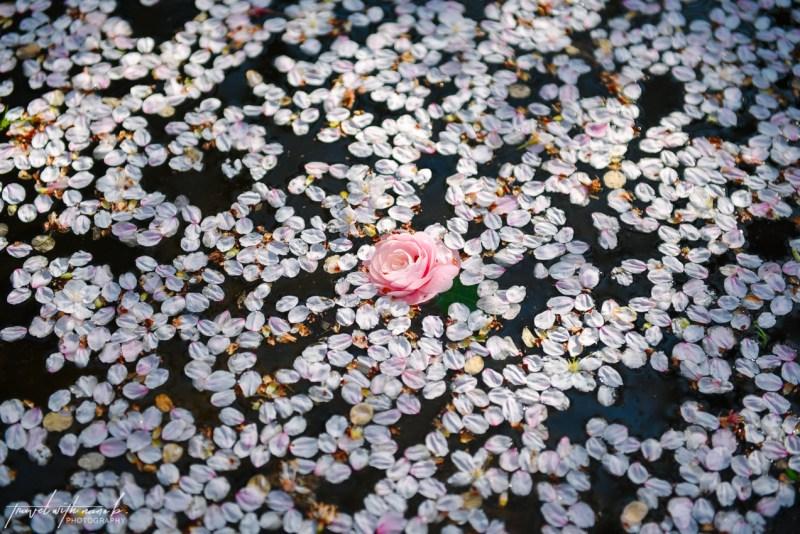 cherry-blossoms-tokyo-20