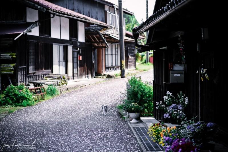 kiso-valley-magome-tsumago-hike-japan-6