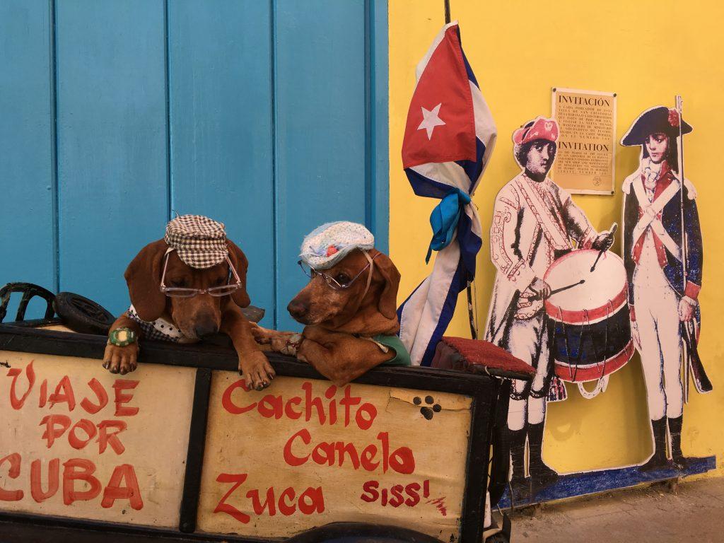 Trained dogs in Plaza de Armas in Havana