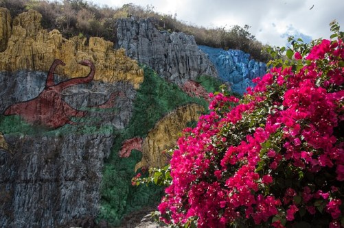 A burst of colorful flowers in Viñales