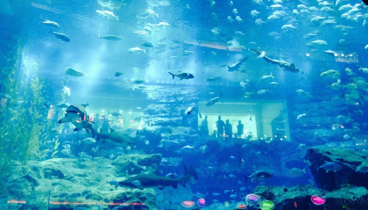 Dubai mall aquarium. Activities in Dubai