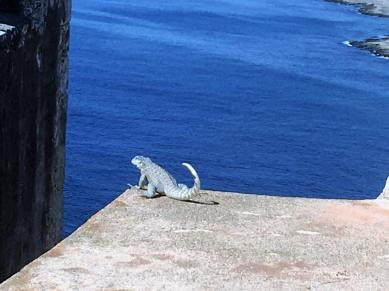 Lizard overlooking Santiago Bay