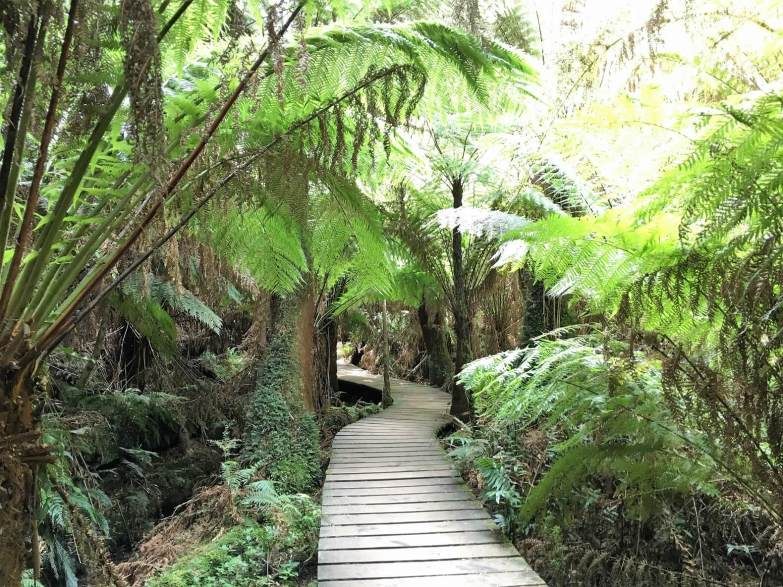 Rain forest in New Zealand