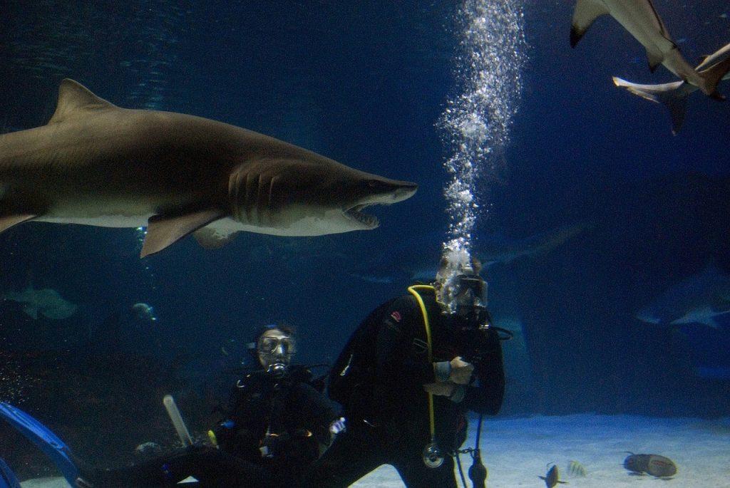Shark swim bucket list