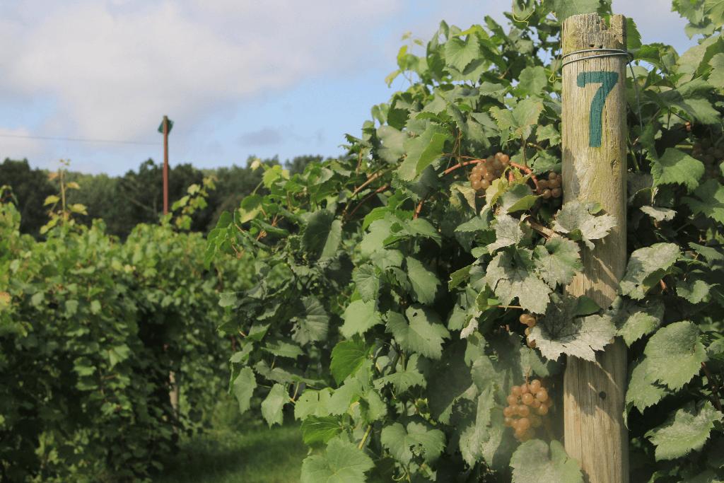 greate wine regions of the americas