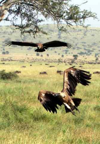 The amazing Serengeti