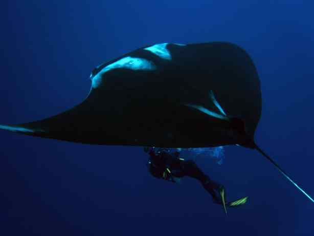 My friend, Chris, filmed this manta beautifully!