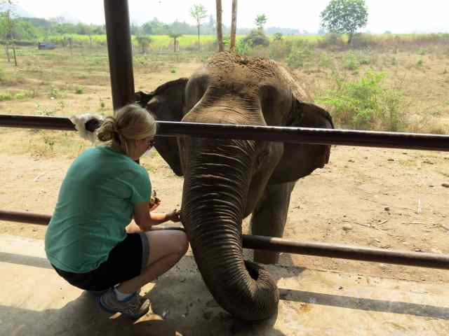 elephant, ethical tourism, our planet