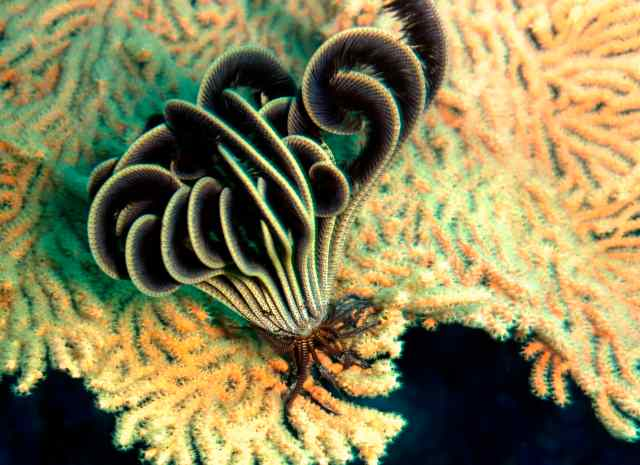 A Feather Star!  A group of animals.