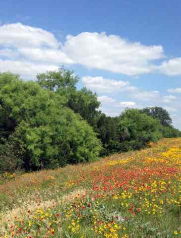Lady Bird's wildflowers