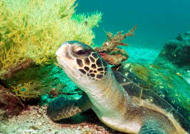 Sea Turtles are so awesome, dude!
