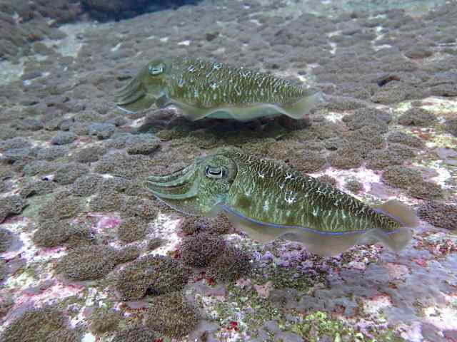 These are cuttle fish? You know the white cuttle boards domestic birds nibble on? This is where they get it.