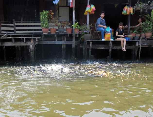 bk 14 canal feeding fish