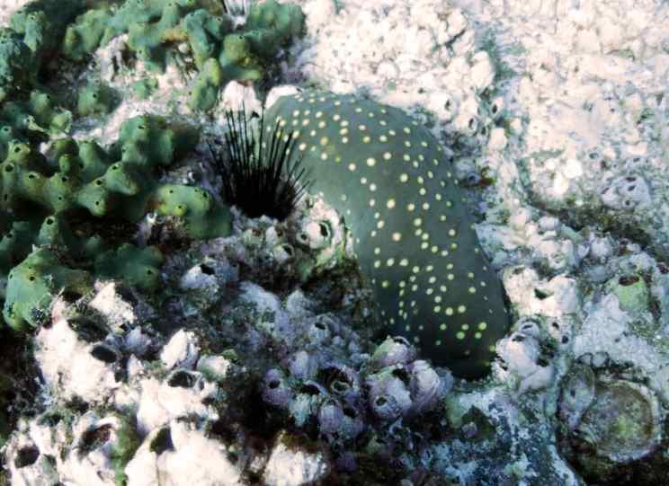 diving revillagigedo