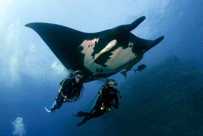 diving, Revillagigadoes, travel