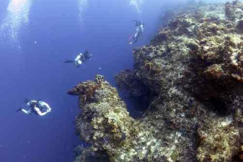 cozumel, cozumel diving