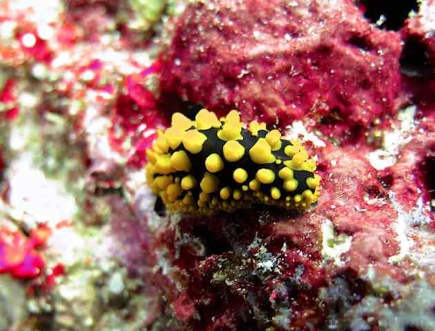 Wart Slug, taken by Jurgen, DM