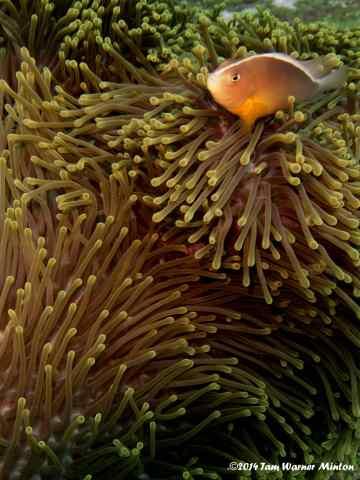 thailand, scuba, liveaboard