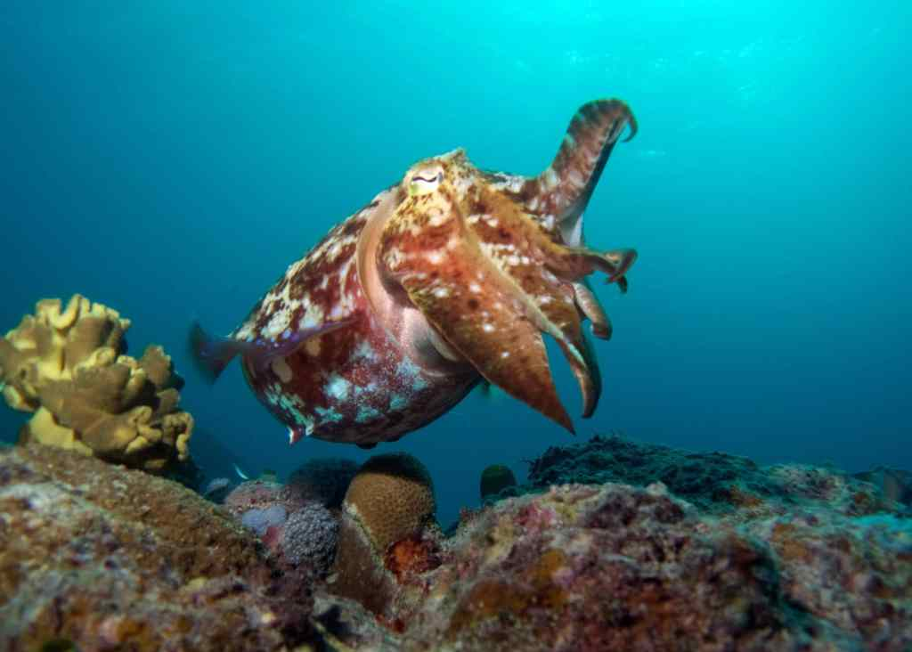 Great Barrier Reef, Spirit of Freedom, Scuba diving Australia