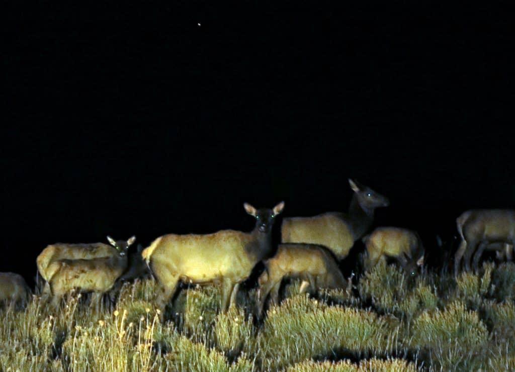 16-elks
