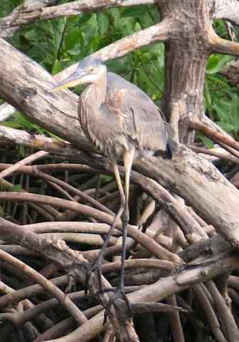 Everglades National Park, Everglades tour, Florida