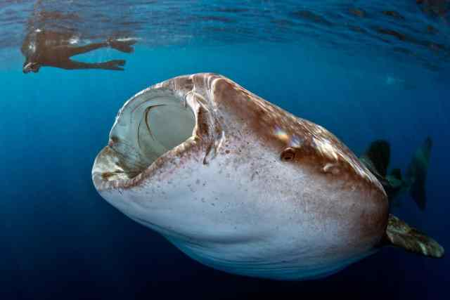 amazing oceans, all fish faces, fish, how to help the ocean, how to make a difference, #exploremore