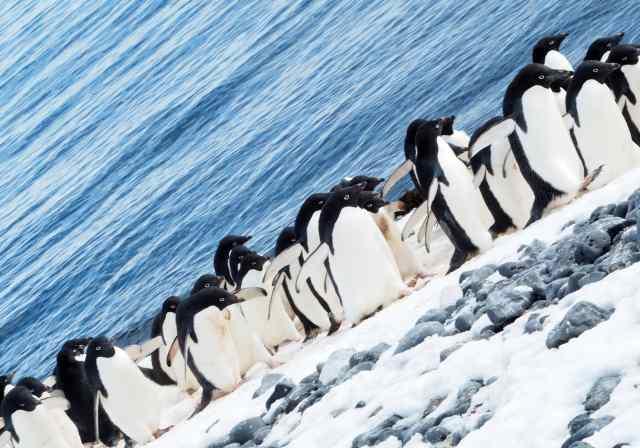Adelies, Penguins, Antarctica