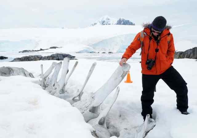 antarctica, Blue whale, leopard seals, Lindblad